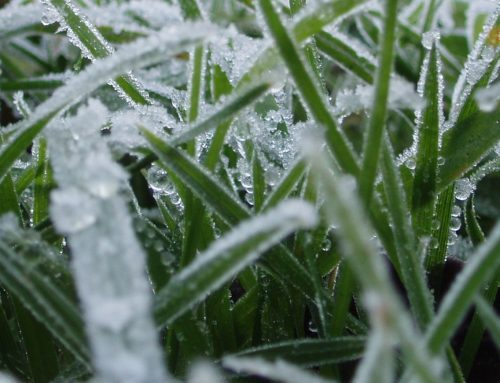 Prepare Your Lawn for Winter
