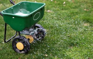 ryegrass overseeding your lawn for winter