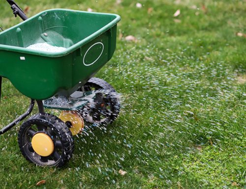 Keep Your Lawn Green this Winter